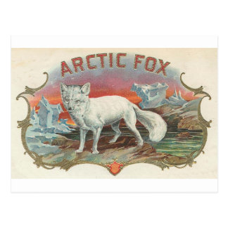 Vintage Arctic Fox Postcard