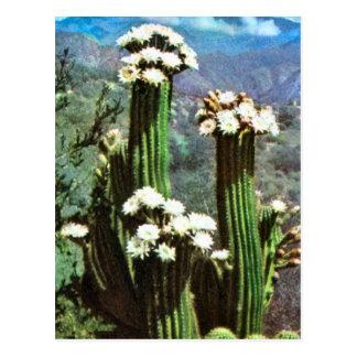 Vintage Argentina Flowering Cactus Post Cards