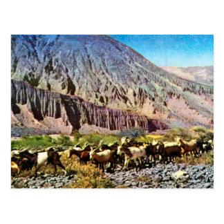Vintage  ,Argentina, Rock Erosion, herd of goats Postcard