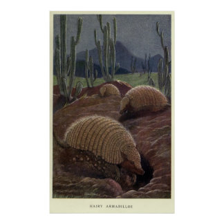 Vintage Armadillo Painting (1909) Poster