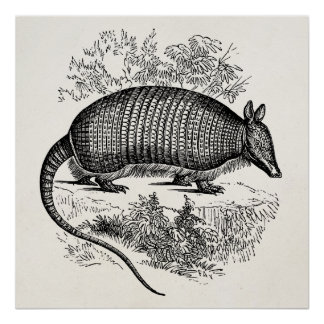 Vintage Armadillo Retro Armadillos Illustration Poster