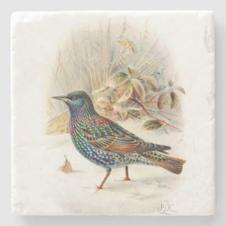 Vintage Art Birds Beautiful Starling Illustration Stone Coaster