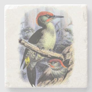 Vintage Art Birds Green Woodpecker Illustration Stone Coaster