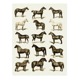 Vintage art Horse Breeds Chart printed postcards