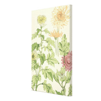 Vintage Art Nouveau, Chrysanthemums in a Garden Canvas Print