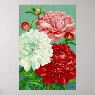 Vintage Art vintage floral Peonies Print