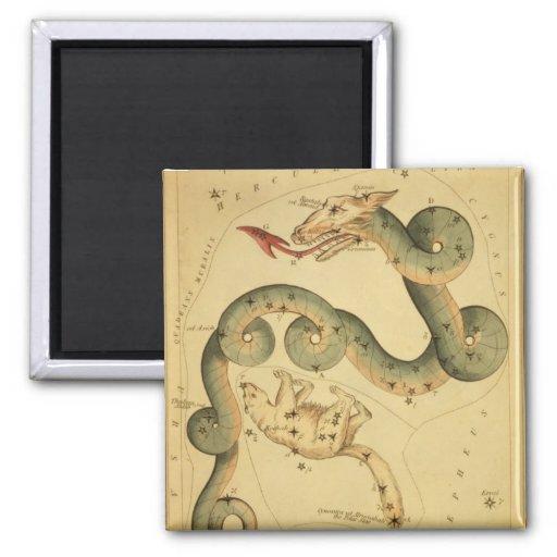 Vintage astronomy print Draco & Ursa Minor Fridge Magnets
