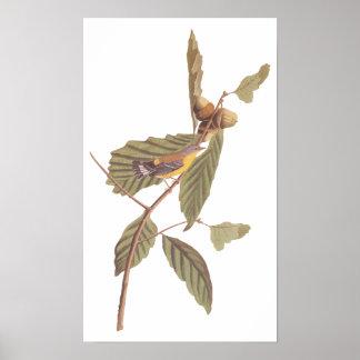 Vintage Audubon Magnolia Warbler Bird Poster