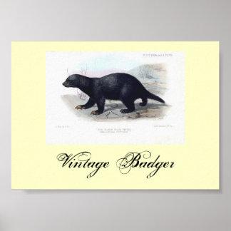 Vintage Badger Poster