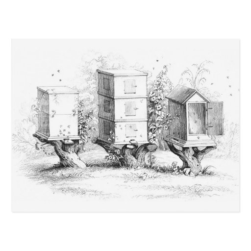 Vintage Bee Boxes Honey Post Card