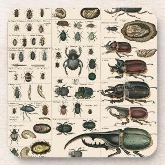Vintage Beetle Illustration Coaster
