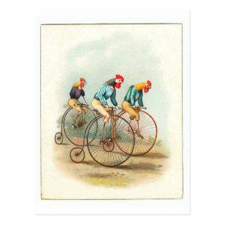 Vintage Bicycle Poster Pennyfarthing Roosters Postcard