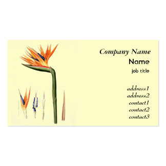 Vintage bird of paradise flower business card template