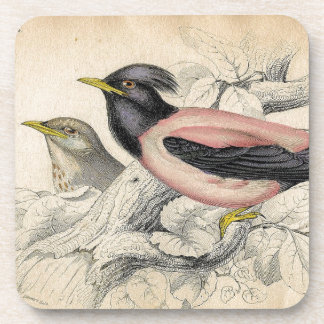 Vintage Bird Print Beverage Coasters
