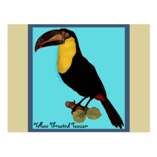 VINTAGE BIRD,  YELLOW-THROATED TOUCAN POSTCARD