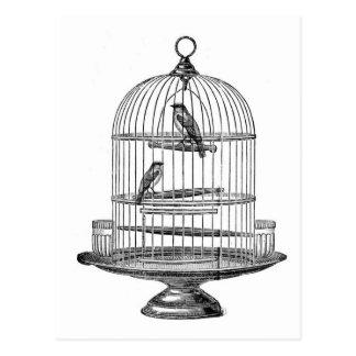 Vintage Birdcage with Birds...postcard Postcard