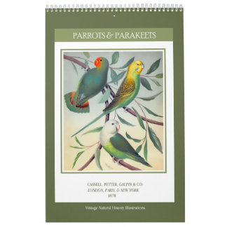 Vintage Birds - Parrots and Parakeets 2018 Calendars