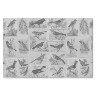 Vintage Black and White Audubon Birds Tissue Paper