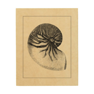 Vintage Black and White Conch Shell Wood Print