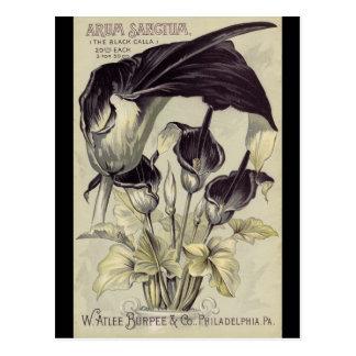 Vintage Black Calla Lilies Postcard