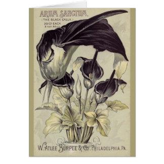 Vintage Black Calla Lillies Card
