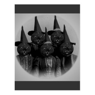 Vintage Black Cat Witches Postcard