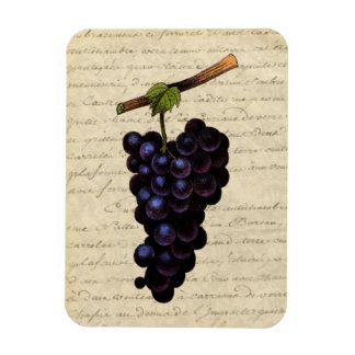 Vintage Black Grapes Rectangular Photo Magnet