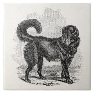 Vintage Black Mastiff Dog 1800s Mastiffs Dogs Ceramic Tile