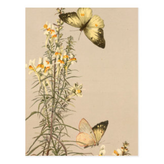 Vintage black white butterfly yellow white floral postcard