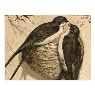 Vintage Black White Cute Love Birds Painting Postcard