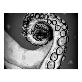 Vintage Black & White Nautical Octopus Tentacle Postcard