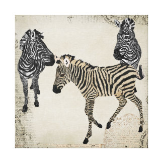 Vintage Black & White Zebra Trio Canvas Print
