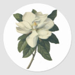 Vintage Blooming White Magnolia Blossom Flowers Round Sticker
