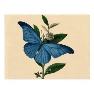 Vintage Blue Butterfly Postcard
