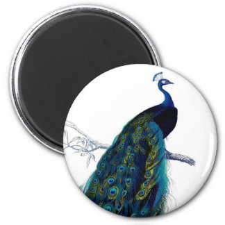 Vintage Blue Elegant Colorful Peacock 6 Cm Round Magnet