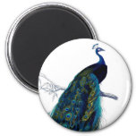Vintage Blue Elegant Colourful Peacock 6 Cm Round Magnet