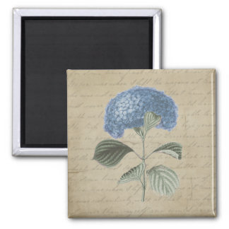 Vintage Blue Hydrangea with Antique Calligraphy Square Magnet