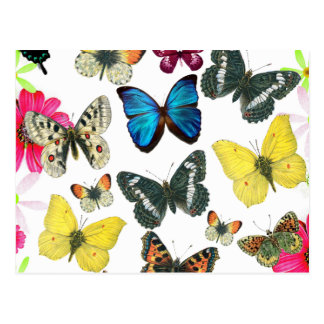 Vintage Blue Red Yellow Colorful Butterflies Postcard