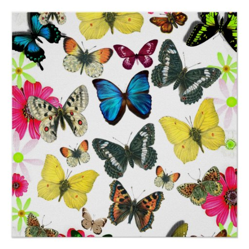 Vintage Blue Red Yellow Colorful Butterflies Posters