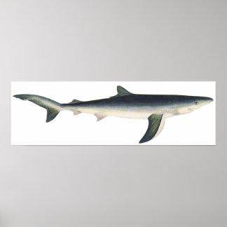 Vintage Blue Shark, Marine Aquatic Ocean Life Poster