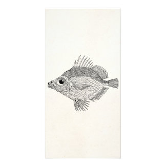 Vintage Boar Fish - Aquatic Fishes Template Blank Customised Photo Card