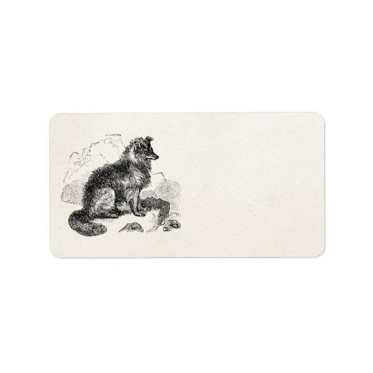 Vintage Border Collie Dog Personalised Retro Dogs Label