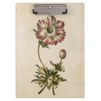 Vintage Botanical Floral Anemone Illustration Clipboard
