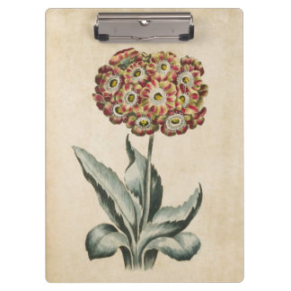 Vintage Botanical Floral Auricula Illustration Clipboard