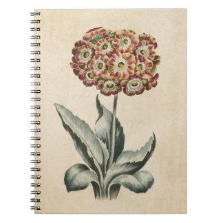 Vintage Botanical Floral Auricula Illustration Notebook