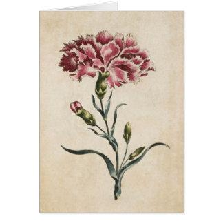 Vintage Botanical Floral Carnation Illustration Card