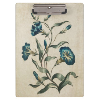 Vintage Botanical Floral Convolvulus Illustration Clipboard