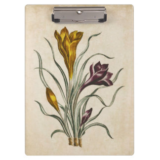 Vintage Botanical Floral Crocus Illustration Clipboard