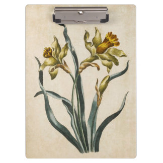 Vintage Botanical Floral Daffodil Illustration Clipboard