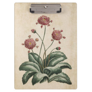 Vintage Botanical Floral Daisy Illustration Clipboard